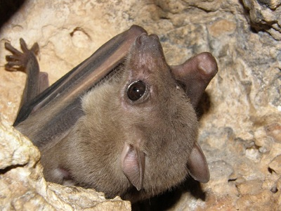 לאיזה צד עטלפים תמיד עפים ?